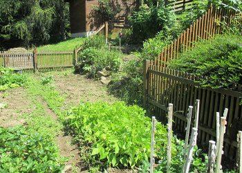 KIT Garten